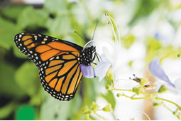 Butterfly and Environmental Research
